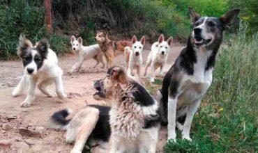 Нападение бездомных собак уголовное наказание чиновникам фото