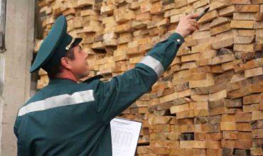 Контрабанда древесины фото
