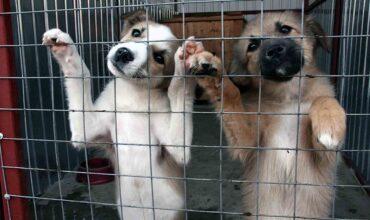 Акт приема животного в приют для животных картинка