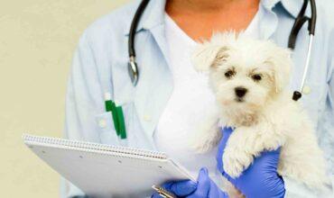 Договор оказания ветеринарных услуг картинка