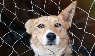 Договор о передаче животного на содержание картинка