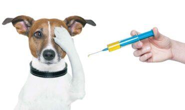 Ветеринарные правила перемещения, хранения, переработки и утилизации биологических отходов картинка