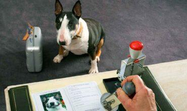 Заявление о приеме животного от владельца в приют для животных картинка