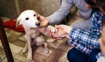 Заявление о выдаче животного из приюта для животных картинка